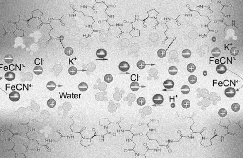 Желатин и соли железа помогут эффективно преобразовать тепло человеческого тела в электричество