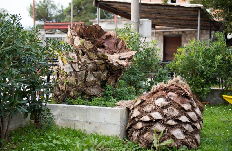 Долгоносик – крохотный убийца деревьев