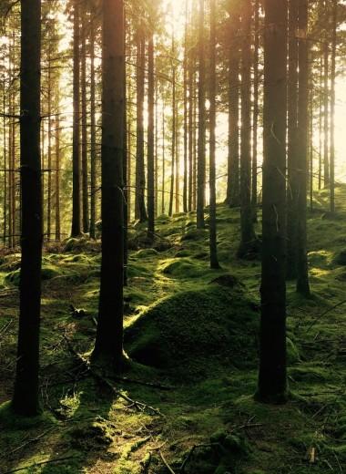Синрин-йоку: Искусство гулять в лесу