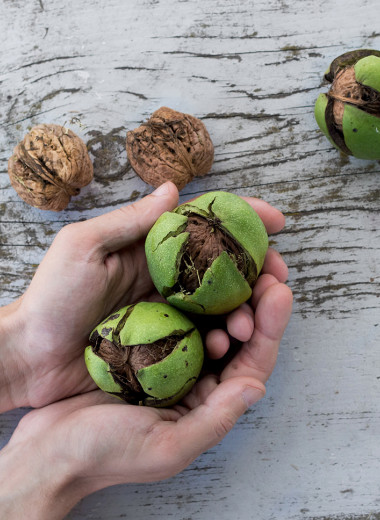 Грецкий орех: 8 научных фактов о пользе