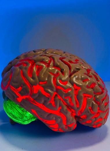 5 способов перезагрузить свой мозг, чтобы он работал еще лучше