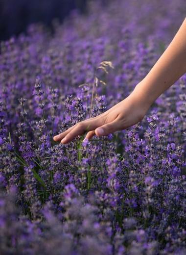 Почему растения не любят, когда их трогают