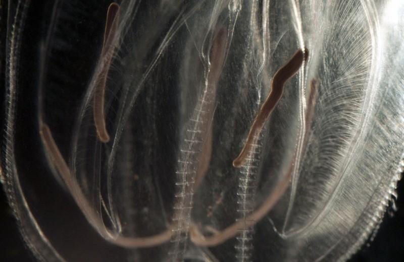 Биологический феномен: животное со странствующими анальными отверстиями