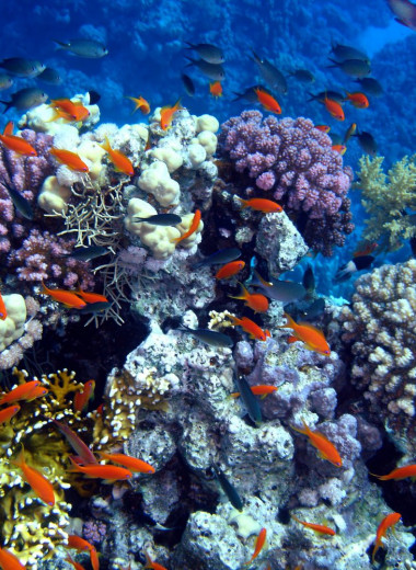 Как коралловые рифы экономят миллиарды долларов