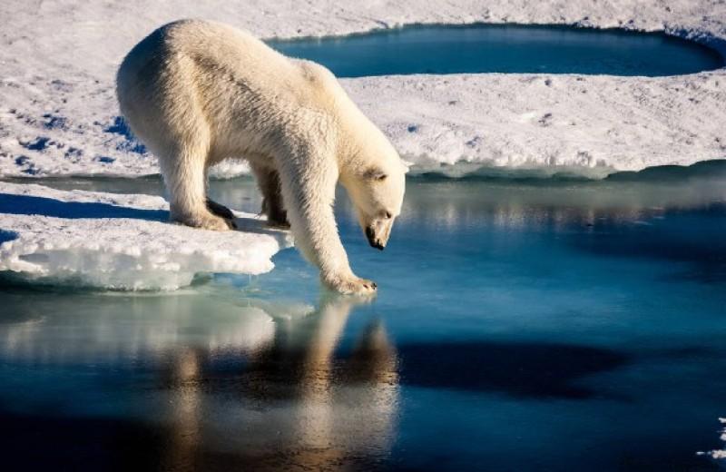 Ученые предрекли почти полное летнее таяние морского льда в Арктике к 2050 году