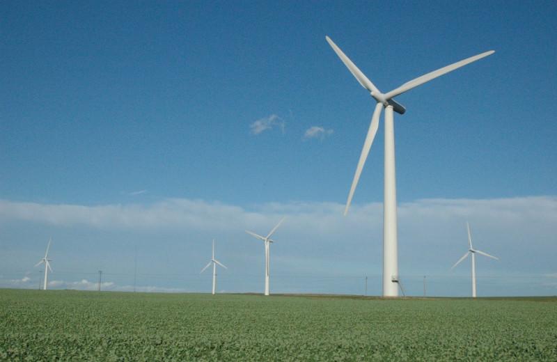 Найден способ значительно снизить смертность птиц из-за ветряных электростанций. Он очень простой