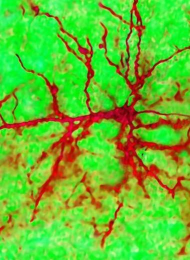 Как работают нейросети?