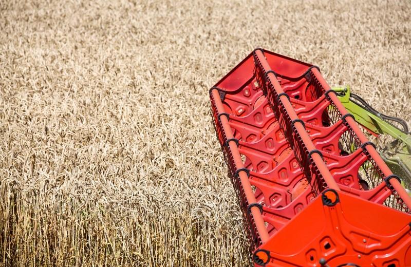 Серп и колос. Русская пшеница угрожает американским фермерам