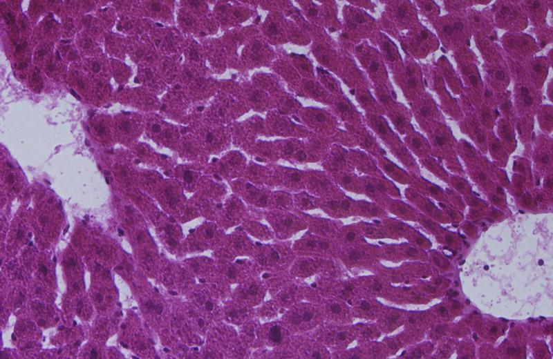 Мозг на заказ: вместилище разума вырастили из клеток