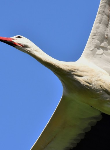 Житель Судана использовал трекер, потерянный птицей, для телефонных разговоров