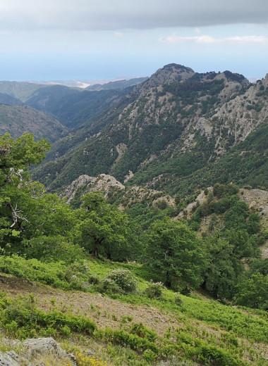 В Италии определили старейшее дерево умеренного климата