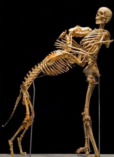 12 фактов о скелете