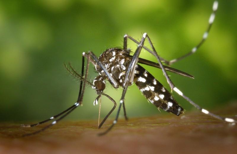 Как стать невидимым для комаров
