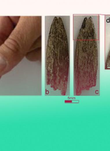 Редкая доисторическая булавка поможет изучить быт древних аборигенов Австралии