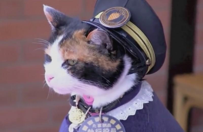 Кошка Тама: вице-президент, спаситель, легенда