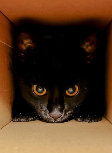 Физики заявили, что нашли способ решить парадокс кота Шрёдингера