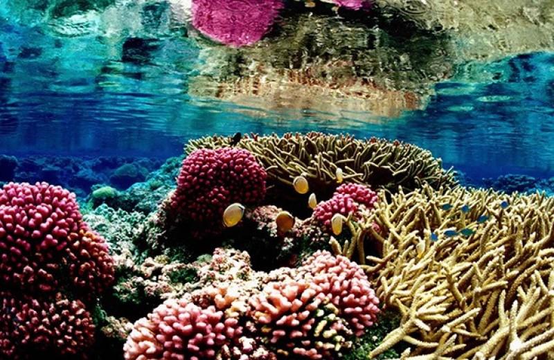 Кислотная расцветка помогла кораллам вернуть симбионтов