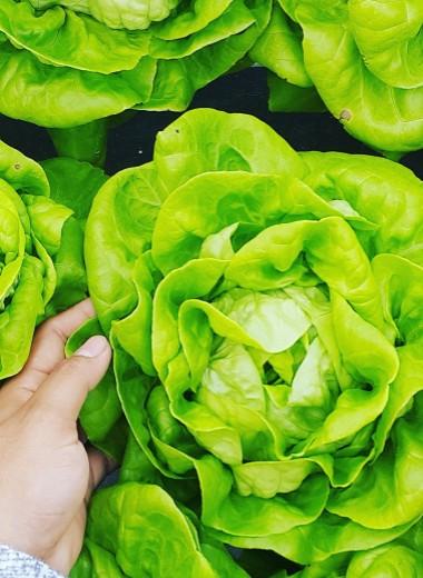 Листовые овощи: 6 лучших рецептов