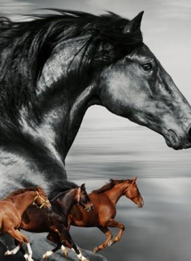 Как Крепыш со Сметанкой коневодство поднимали: неожиданно захватывающая история лошадиных пород