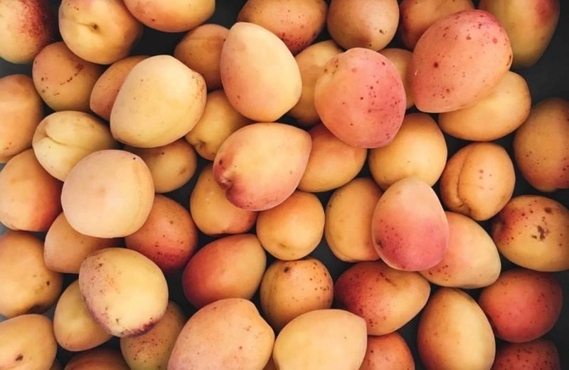 Как выбрать абрикосы на стол, для заготовок, для посадки