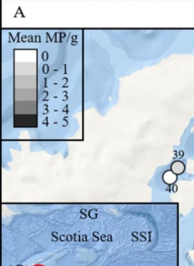 В окрестностях Антарктиды нашли глубоководный микропластик