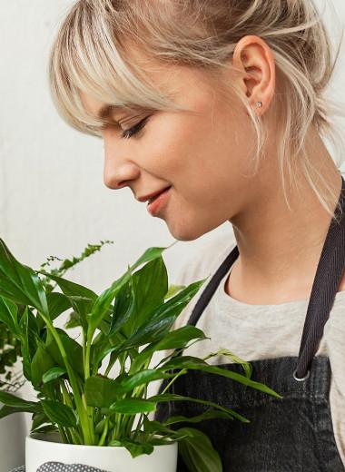 Для кожи, пищеварения и от стресса: лекарственные растения с подоконника
