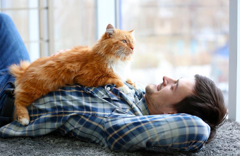 Как понять, что твой кот тобой доволен