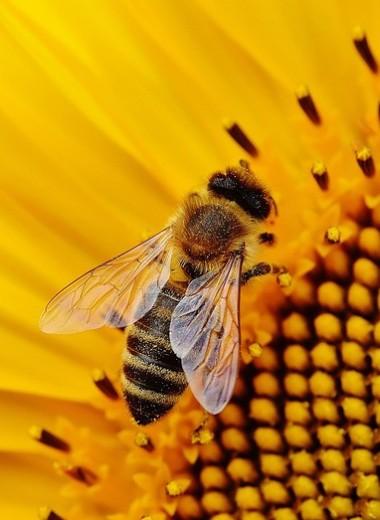 5 укусов насекомых, которые нельзя игнорировать (могут возникнуть осложнения)