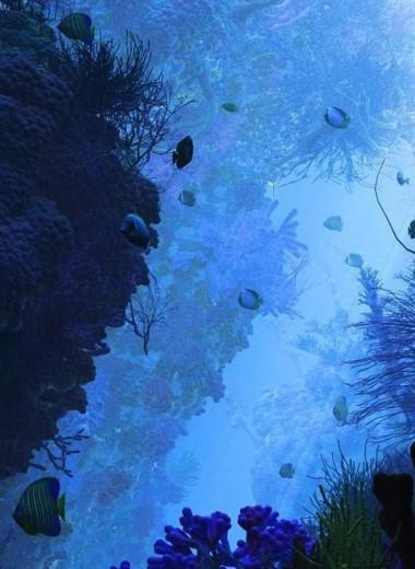 Что скрывает «пустыня» в глубинах Тихого океана: мертвая зона