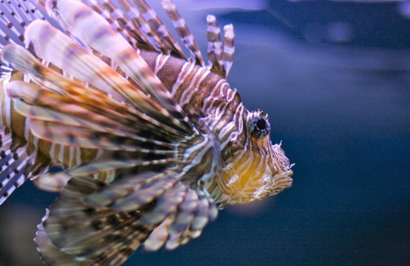 Ареалы ядовитых медуз и рыб растут: почему и что делать?