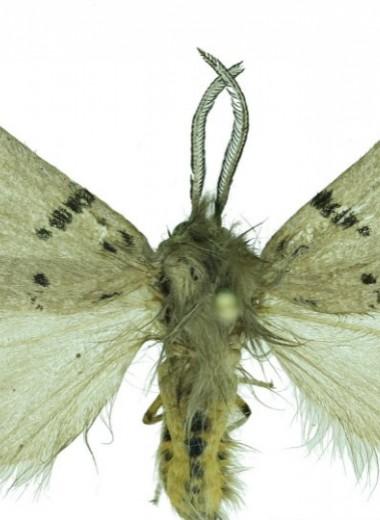 Российский ученый открыл новый вид бабочек на Тянь-Шане и Памире