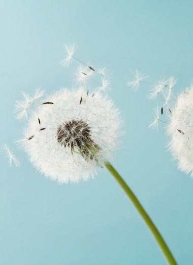 Когда весна не в радость: как победить аллергический ринит