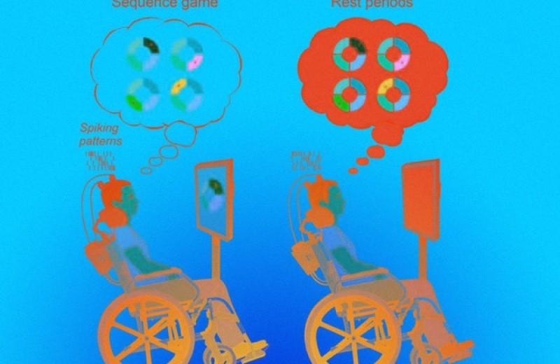 Моторная кора повторила запомненную информацию во время отдыха