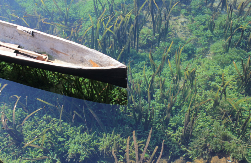 Первым делом — экология. Как живые существа помогают архитекторам очищать воду
