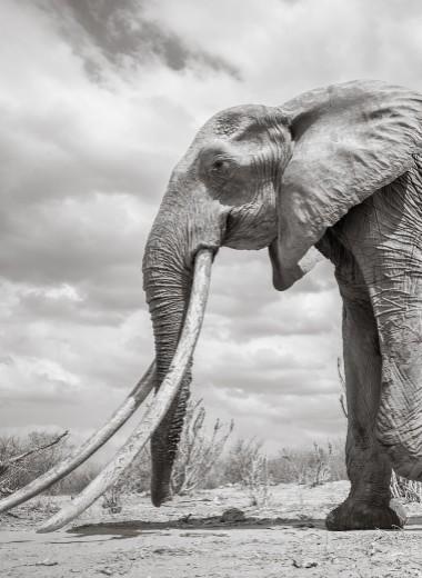 Королева слонов: редкие фото
