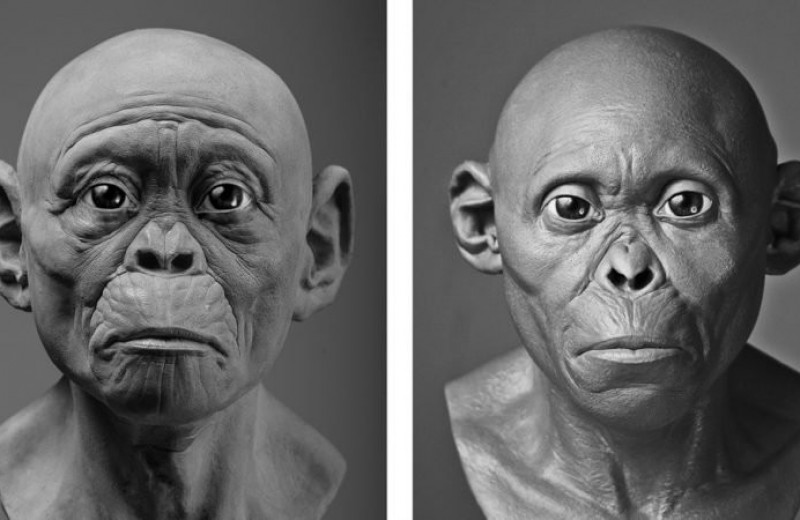 Созданы новые изображения древних гоминидов, направленные на преодоление художественных предубеждений