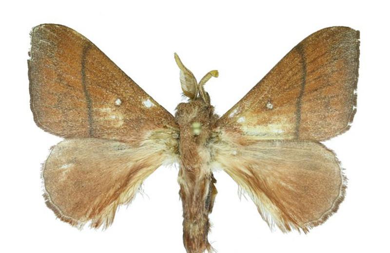 Биологи описали 10 новых видов бабочек, обитающих в Юго-Восточной Азии