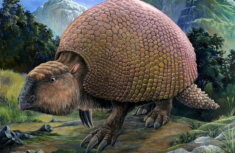 Людей оправдали в «деле» о вымирании мегафауны Северной Америки