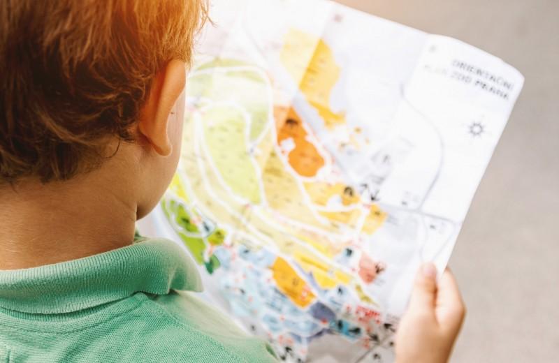 О чем фантазирует твой ребенок: расскажет знак зодиака (спойлер — в списке есть русалки и сказочные дельфины)