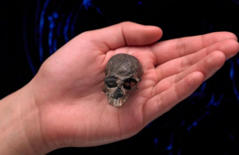 О чём рассказал крошечный череп
