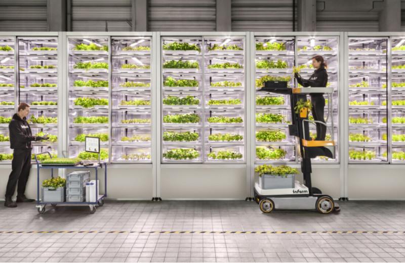 Выращивает салат в автоматах и хочет спасти мир: как немецкая Infarm привлекла $315 млн на «рукколу для богатых»