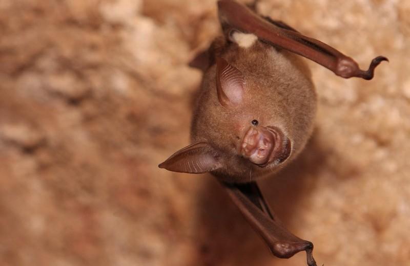 Почему летучие мыши приземляются вниз головой