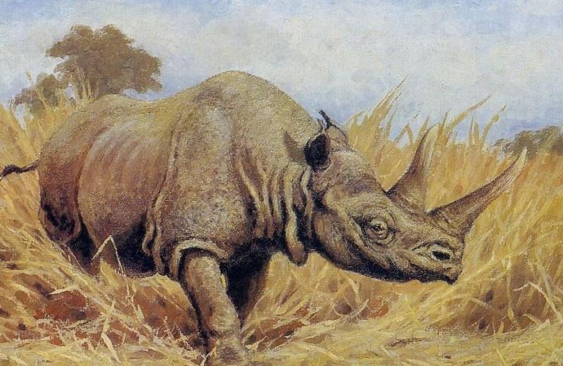 На «Земле леопарда» найдены останки древнего носорога