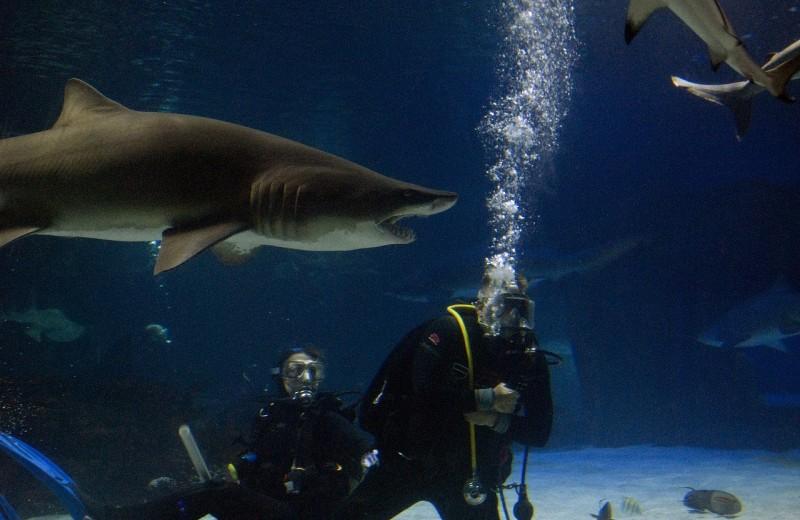 В Австралии создают «противоукусный» гидрокостюм для защиты от акул