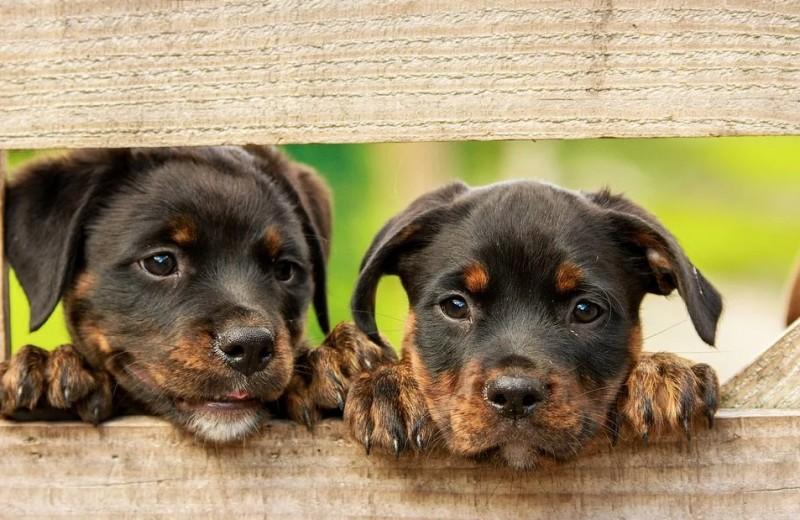«Вы все еще верите? Тогда мы идем к вам!», или Самые распространенные мифы о собаках