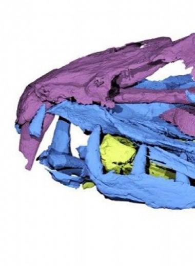 Эоценовые анчоусы оказались крупными саблезубыми хищниками