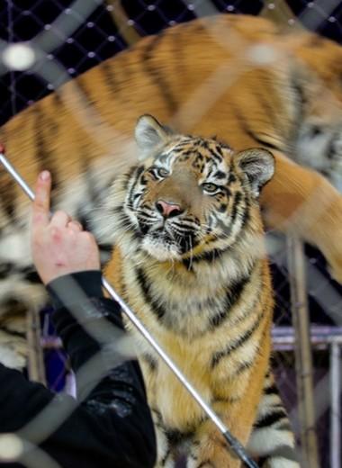 Визитная карточка дремучей России: что происходило с животными в закрытых на карантин цирках