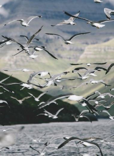 Фарерские острова: холодная жемчужина Атлантики