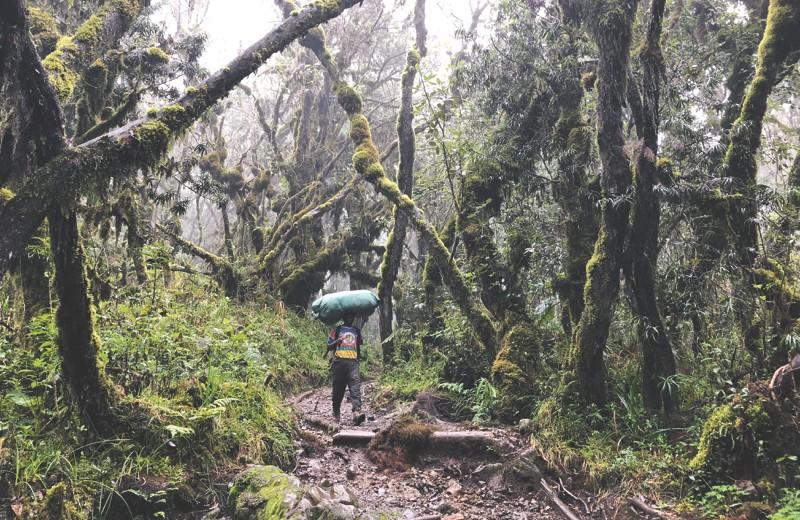 Игра на повышение: восхождение на Килиманджаро