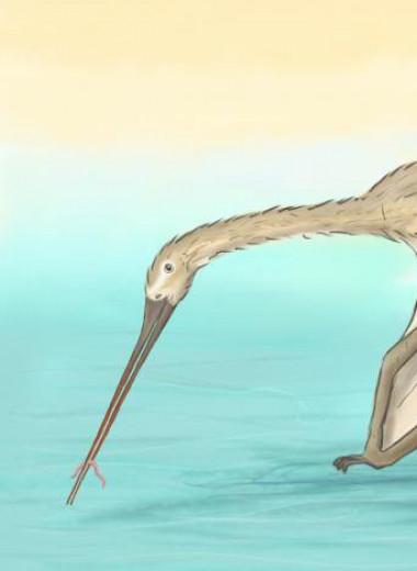 Открыт новый вид птерозавра, которого поначалу принимали за рыбу
